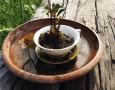 新芽其のニ★NARAYA CAFEさんから頂いたミニ盆栽