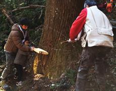 報徳二宮神社 第3回御用材伐採式。
