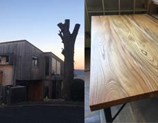 思い出もくもく企画:武藤さんのお庭の木 【伐採~製品】