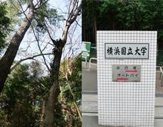 思い出もくもく企画:横浜国立大学の隣接地【伐採準備】
