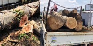 思い出もくもく企画:宅地造成で伐採した木【伐採】