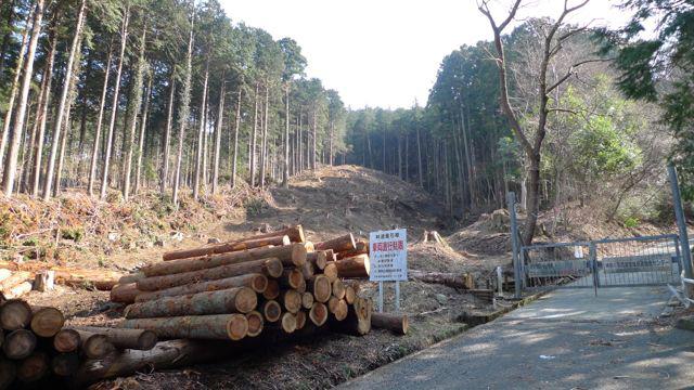 和留沢地区の間伐