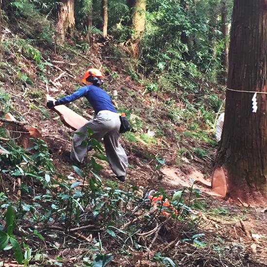 報徳二宮神社 表参道鳥居御用材伐採式に出席しました。