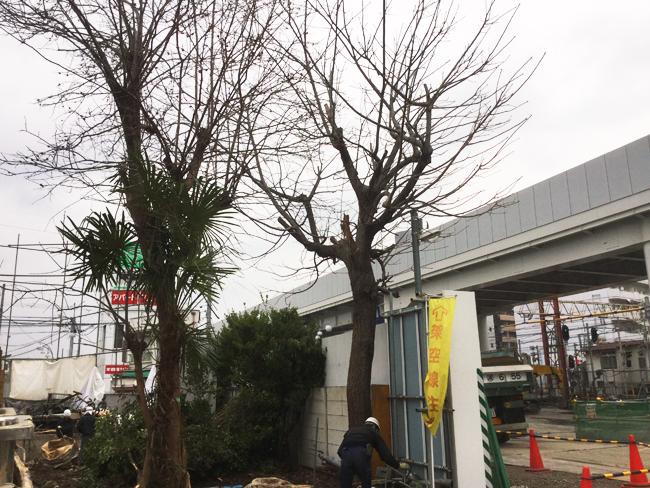 人見さんの庭の木 【伐採】