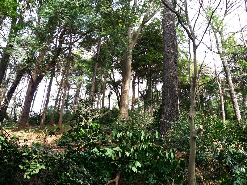 思い出もくもく企画:横浜国立大学の隣接地【伐採】